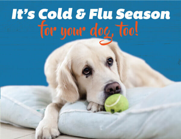 Cold and Flu Season for Your Dog Too!