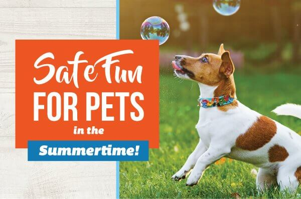 Summer Pet Tips