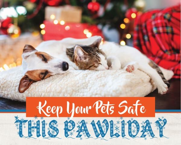 Holiday Pet Safety | Las Tablas Animal Hospital
