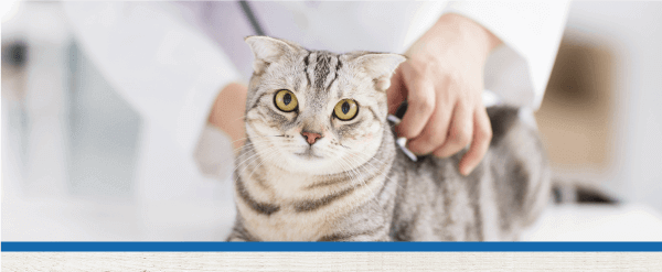Take Your Cat to the Vet Day Is August 22nd